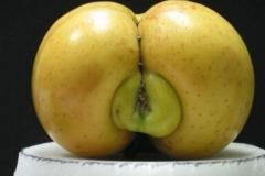 Horny Nature