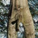 horny-nature1.jpg