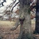 horny-nature2.jpg