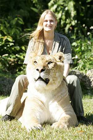 Index of /wp-content/gallery/lion-tiger