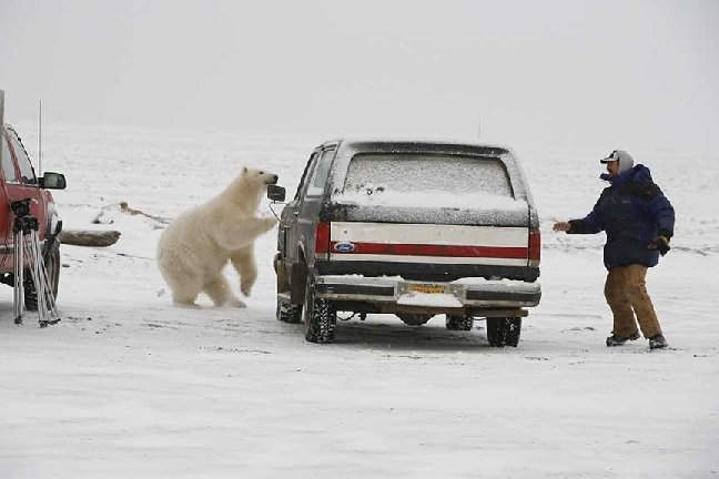 mad-polar-bear3.jpg