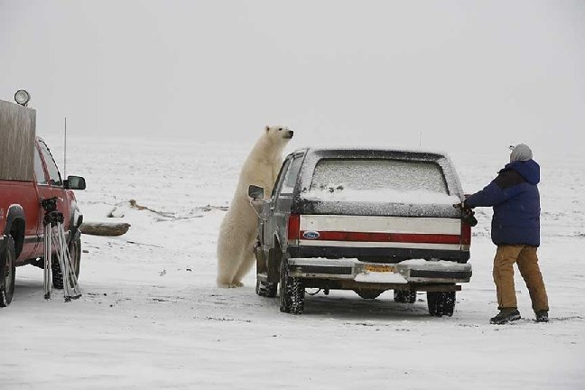 mad-polar-bear4.jpg