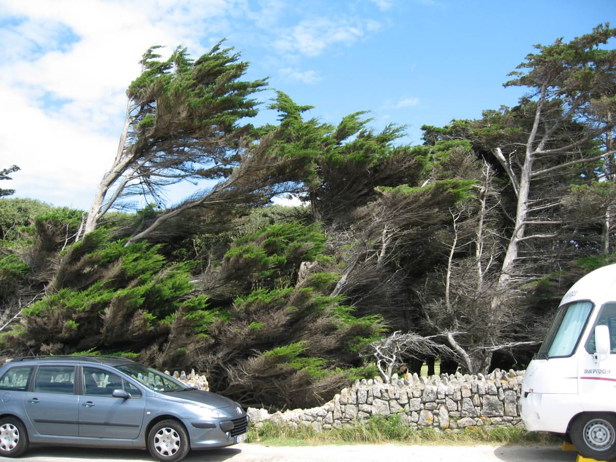 Falling Trees Croisic