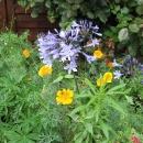 Flowers Nantes