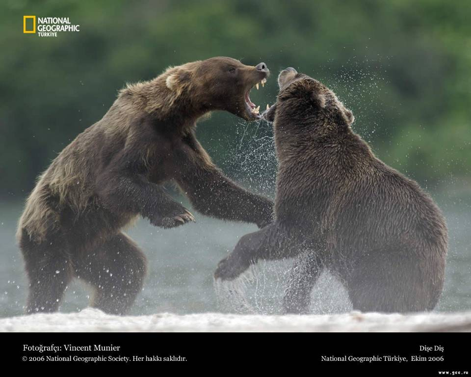 national-geographic17.jpg