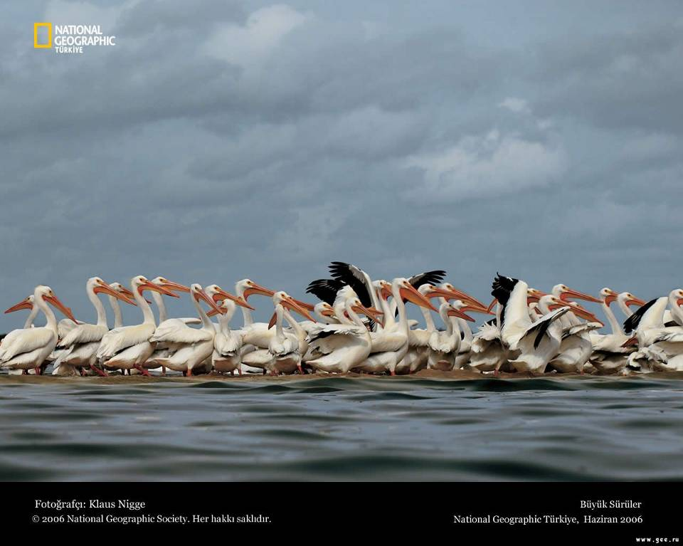 national-geographic20.jpg