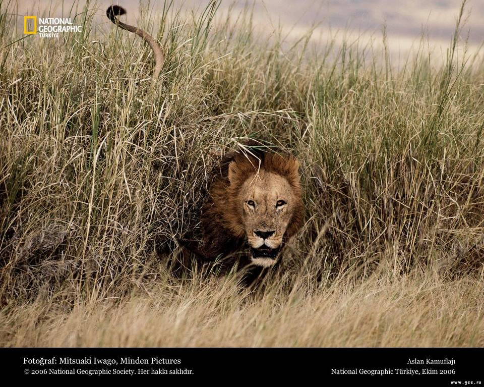 national-geographic29.jpg