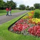 Phoenix Park Flowers