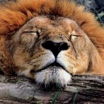 The Lion Sleeps Tonight – Video by XarJ
