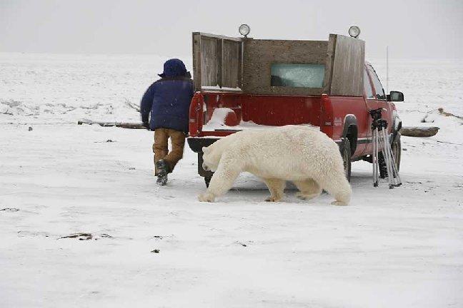 Mad Polar Bear - XarJ Blog and Podcast